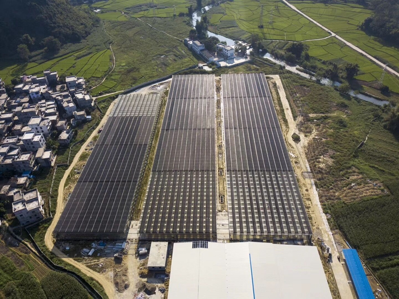 Good News | Guangxi glass greenhouse demonstration project, built by Trinog-xs greenhouse and Dutch industry giant, is about to be completed in an all-round way!